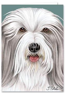 Bearded Collie - Blank Card-0
