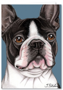 Boston Terrier - Blank Card-0