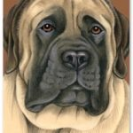 English Mastiff – Blank Card-0