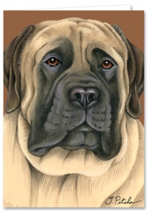 English Mastiff - Blank Card-0