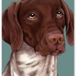German Shorthaired Pointer – Blank Card-0