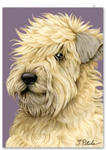 Wheaten Terrier - Blank Card-0