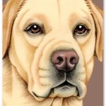 Yellow Labrador - Blank Card-0