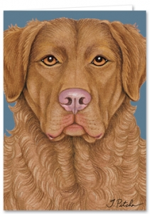 Chesapeake Bay Retriever - Blank Card-0