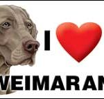 I (heart) my Weimaraner Large Waterproof Magnet-0