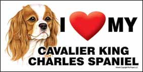 I (heart) my Cavalier King Charles Spaniel Large Waterproof Magnet-0