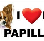I (heart) my Papillon Large Waterproof Magnet-0