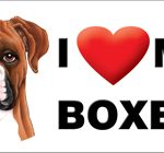 I (heart) my Boxer - Large Waterproof Magnet-0