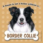 Border Collie Fridge Magnet-0
