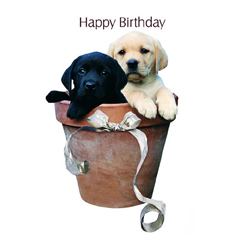 Potted Labrador Puppies – Birthday Card-0