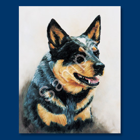 Australian Cattle Dog- 6 pack Note Cards--0