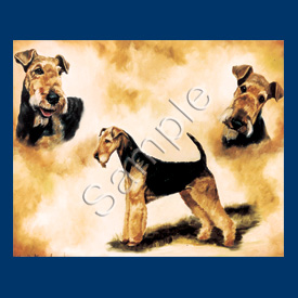 Airedale Terrier- 6 pack Note Cards--0