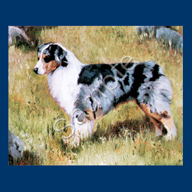 Australian Shepherd- 6 pack Note Cards.-0