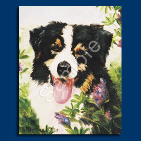 Australian Shepherd- 6 pack Note Cards--0