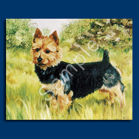 Australian Terrier- 6 pack Note Cards-0