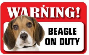 Beagle Warning Sign-0