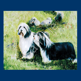 Bearded Collie – List Pad & Magnet Combo-0