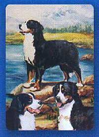 Bernese Mountain Dog - Deck of Playing Cards-0