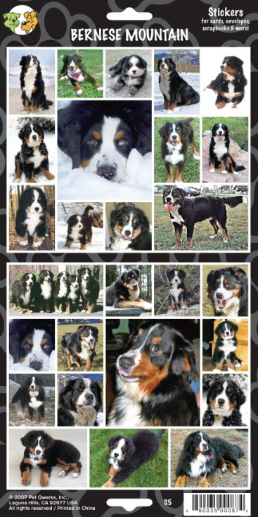 Bernese Mountain - Stickers-0