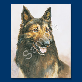 Belgium Tervuren- 6 pack Note Cards-0