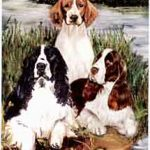 English & Welsh Springer Spaniel - Deck of Playing Cards-0