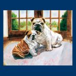 Bulldog – 6 pack Note Cards–0