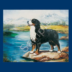 Bernese Mountain Dog- 6 pack Note Cards-0