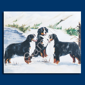 Bernese Mountain Dog- 6 pack Note Cards--0