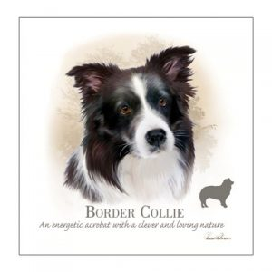 Border Collie - Blank Card-0