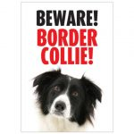 Beware Border Collie Gate/ Door Sign -0