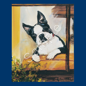 Boston Terrier- 6 pack Note Cards-0