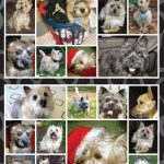 Cairn Terrier – Stickers-0