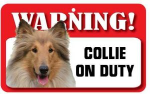 Rough Collie Warning Sign-0