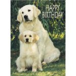 Golden Retriever –  Birthday Card-0