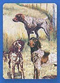 German Shorthaired Pointer - Deck of Playing Cards-0