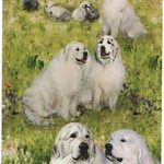 Great Pyrenees  – Deck of Playing Cards-0