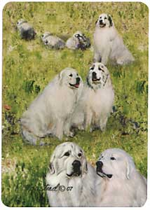 Great Pyrenees - Deck of Playing Cards-0