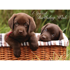 Chocolate Labrador Puppies - Birthday Card-0