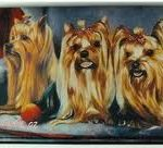 Yorkshire Terrier Wallet-0
