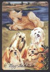 Lhasa Apso - Deck of Playing Cards-0