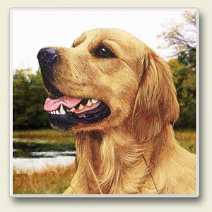 Golden Retriever - Stone Coaster-0
