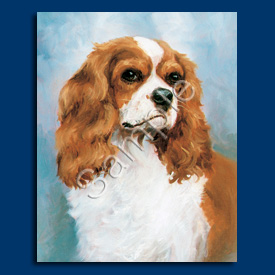 Cavalier King Charles Spaniel- 6 pack Note Cards–0