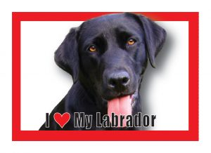 I (heart) my (Black) Labrador Magnet-0