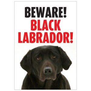 Beware Black Labrador Gate/ Door Sign -0