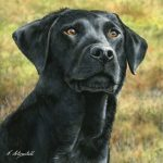 """Labrador """"on the Lookout"""" - Blank Card-0"""