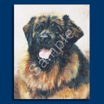 Leonberger- 6 pack Note Cards-0