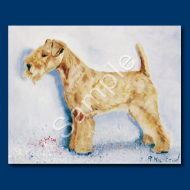 Lakeland Terrier - 6 pack Note Cards-0