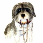 Shih Tzu Sitting white/brown figurine-0