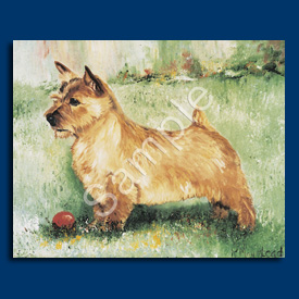 Norwich Terrier- 6 pack Note Cards-0
