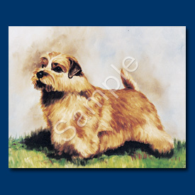 Norfolk Terrier- 6 pack Note Cards-0